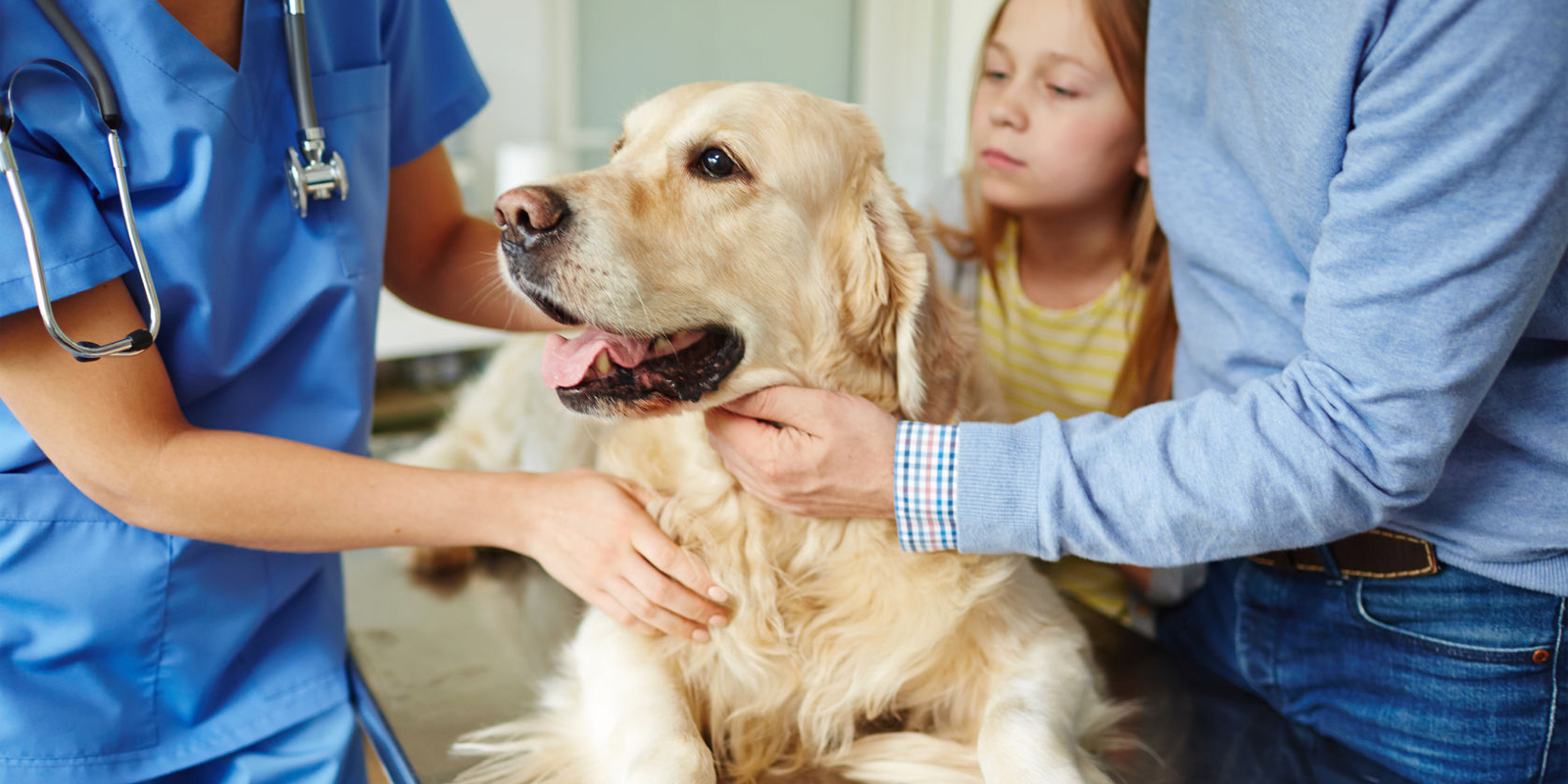 Application for Pet Medical Financial Assistance